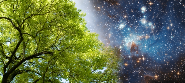 A green tree superimposed over stars in space.